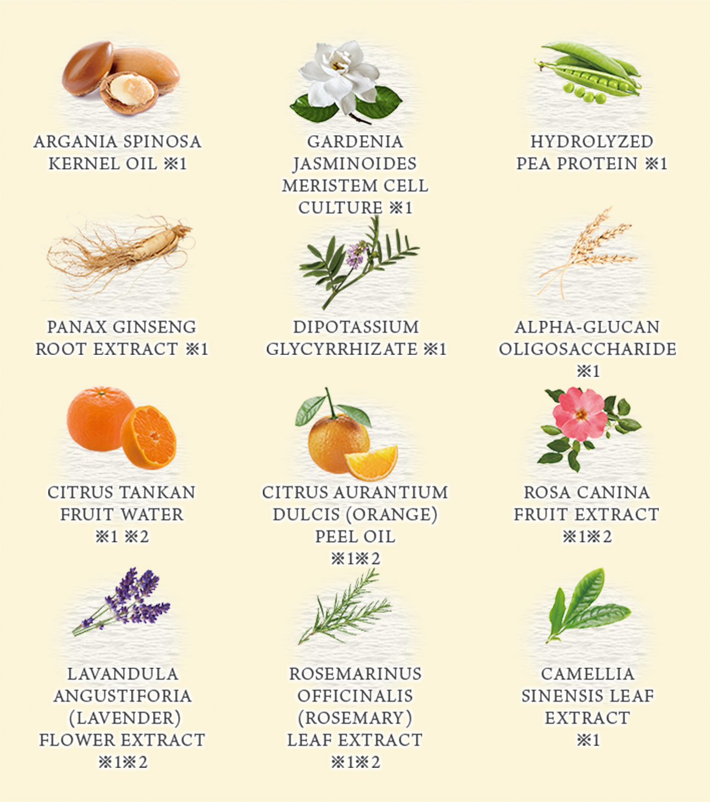 12 Botanical ingredients which hydrate hair gently