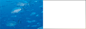 Soluble Proteoglycan